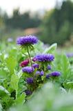 Gisement de fleurs Image stock