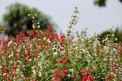 Gisement de fleurs Photo libre de droits