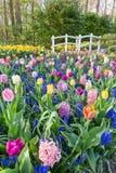 Gisement de fleurs avec les jacinthes et le pont de tulipes image stock