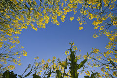 Gisement de fleurs jaune Photographie stock