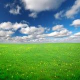 Gisement de fleurs jaune sous le ciel nuageux bleu Image libre de droits