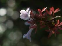 Gisement de fleurs sauvages image libre de droits