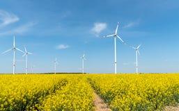 Gisement de floraison de graine de colza avec des turbines de vent dans le dos photo stock