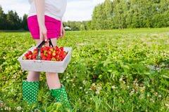 Gisement de fraise Images libres de droits