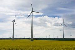 Gisement de graine de colza avec des moulins à vent Photographie stock