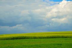 Gisement de graine de colza sous le ciel nuageux Photographie stock
