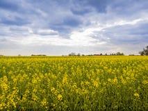 Gisement de graine de colza sous le ciel nuageux Photos libres de droits