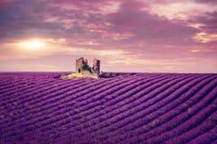 Gisement de lavande au coucher du soleil images libres de droits