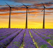 Gisement de lavande avec des turbines de vent Images stock