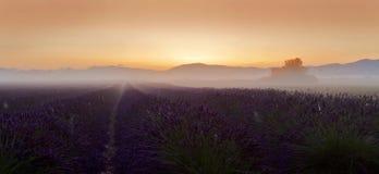 Gisement de lavande de lever de soleil sur le plateau de Valensole Photos stock