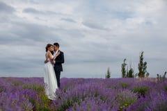Gisement de lavande de mariage Photo libre de droits