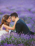 Gisement de lavande de mariage Photos stock