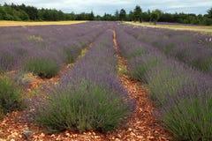 Gisement de lavande pendant l'été en Provence, France du sud Images stock