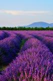 Gisement de lavande, Provence, France Photographie stock