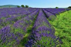 Gisement de lavande, Provence, France Images stock