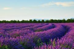 Gisement de lavande, Provence, France Image libre de droits