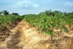 Gisement de pomme de terre de paysage après récolte Images libres de droits