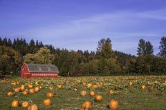 Gisement de potiron dans l'automne 1 photos stock
