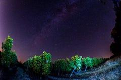 Gisement de raisin pendant la nuit, Bordeaux Wineyard images libres de droits