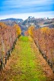 Gisement de raisins avec l'herbe Photographie stock libre de droits