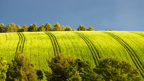 Gisement de ressort avec des arbres Photo libre de droits