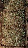 Gisement de ressort cultivant les cultures agricoles poussées photos libres de droits