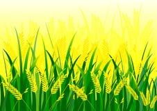 Gisement de riz illustration de vecteur