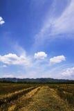 Gisement de riz après récolte Photographie stock libre de droits