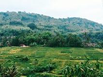 Gisement de riz au sumedang Image stock