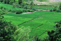 Gisement de riz au sumedang Java occidental Indonésie Photo libre de droits