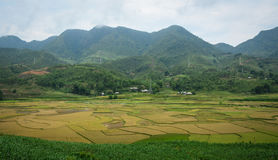 Gisement de riz au Vietnam du nord Images libres de droits
