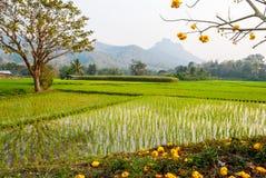 Gisement de riz avec l'arbre d'or Images libres de droits