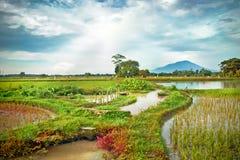 Gisement de riz avec la montagne comme fond Photo stock