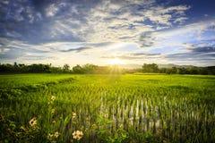 Gisement de riz avec le ciel Photo stock