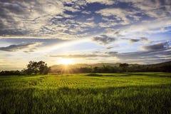 Gisement de riz avec le ciel Photo libre de droits