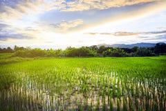 Gisement de riz avec le ciel Photographie stock libre de droits