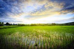 Gisement de riz avec le ciel Photos libres de droits