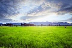 Gisement de riz avec le ciel Images stock