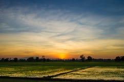 Gisement de riz avec le coucher du soleil Images stock