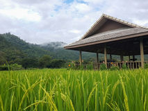 Gisement de riz avec le fond de montagne Images stock