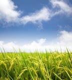 Gisement de riz avec le nuage Image libre de droits