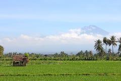 Gisement de riz avec une hutte avec un volcan Image libre de droits