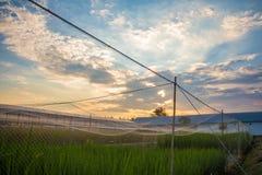 Gisement de riz d'agriculteur et de coucher du soleil Photo stock