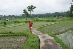 Gisement de riz dans Bali, Indonésie Photographie stock
