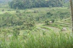 Gisement de riz dans Bali, Indonésie Photos stock