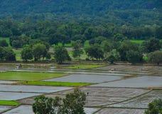 Gisement de riz dans le delta du Mékong, Vietnam du sud Image libre de droits