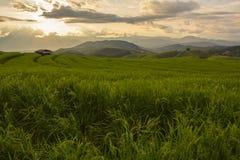 Gisement de riz dans le nord de la Thaïlande Photo stock