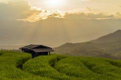 Gisement de riz dans le nord de la Thaïlande Images stock