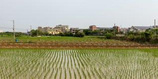 Gisement de riz dans le secteur de Taoyuan, Taïwan en avril 2016 Images libres de droits