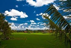 Gisement de riz dans le village de Bali images stock